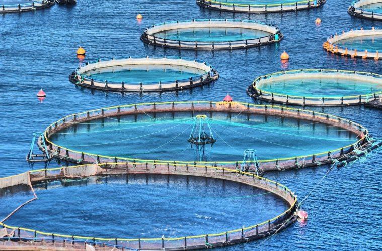 أهمية جودة المياة بالمزارع السمكية